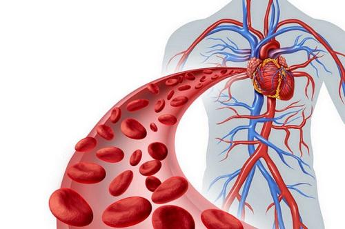 Как почистить свою кровь? изображение