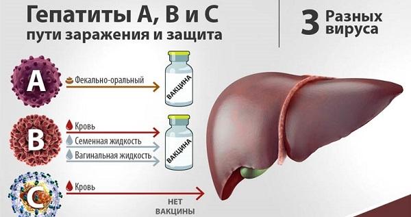 Виды гепатита изображение