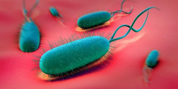 Бактерия Helicobacter pylori изображение